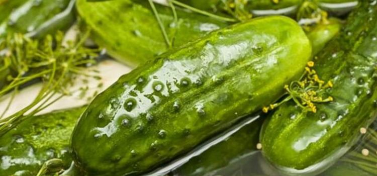 московские малосольные огурцы. Рецепты вкусных малосольных огурцов