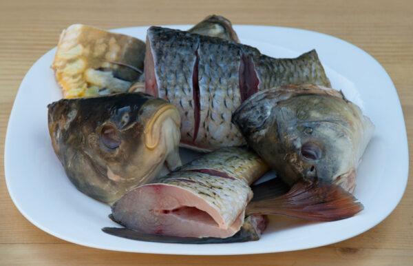 рыбный бульон- основа вкусного супа