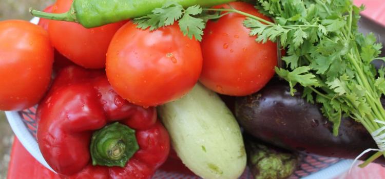 набор овощей для рататуй